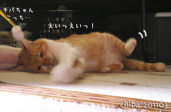 chiba11-3-145.jpg