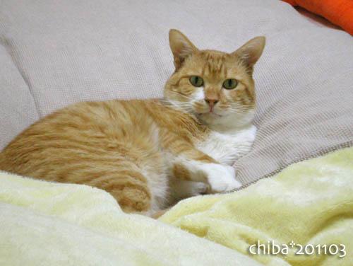 chiba11-3-15.jpg