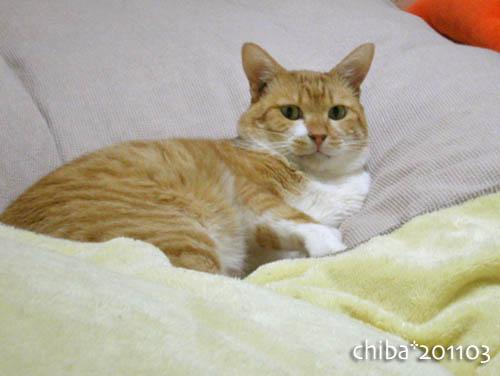 chiba11-3-16.jpg