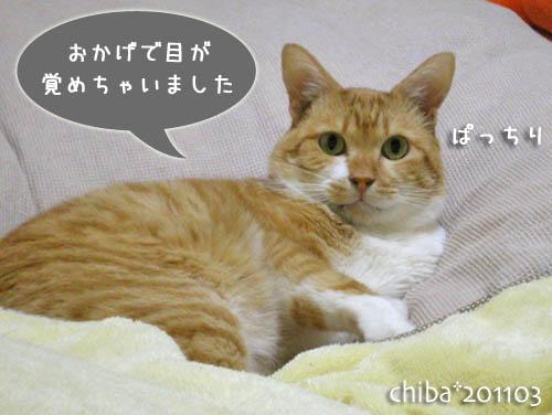 chiba11-3-18s.jpg