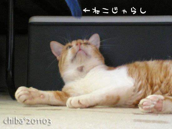 chiba11-3-20.jpg