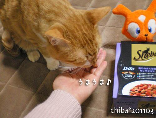 chiba11-3-24.jpg