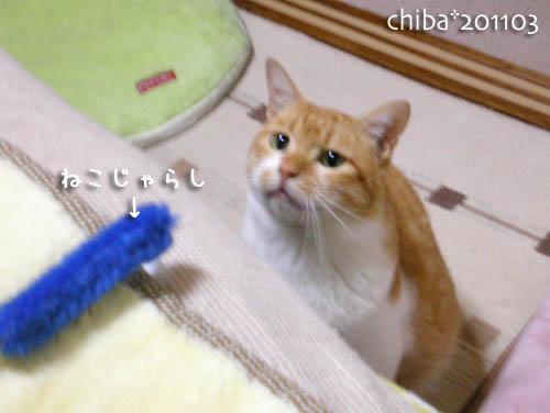 chiba11-3-27.jpg