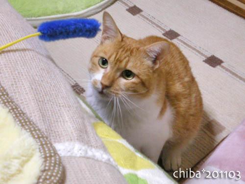 chiba11-3-29.jpg
