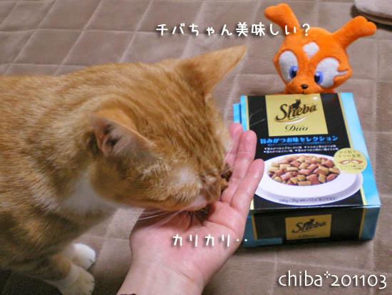 chiba11-3-50.jpg