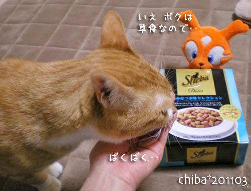 chiba11-3-52.jpg