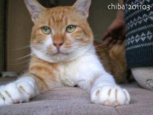 chiba11-3-57.jpg