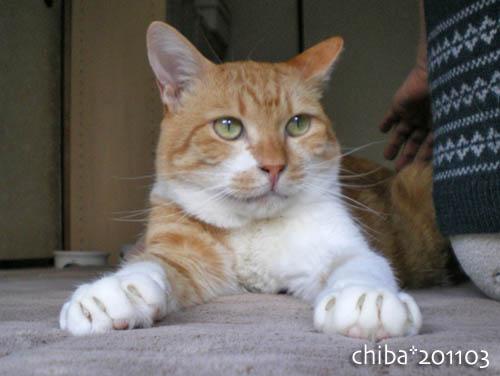 chiba11-3-58.jpg
