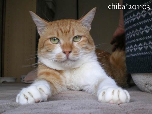 chiba11-3-60.jpg