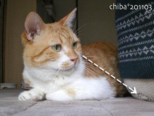 chiba11-3-66.jpg