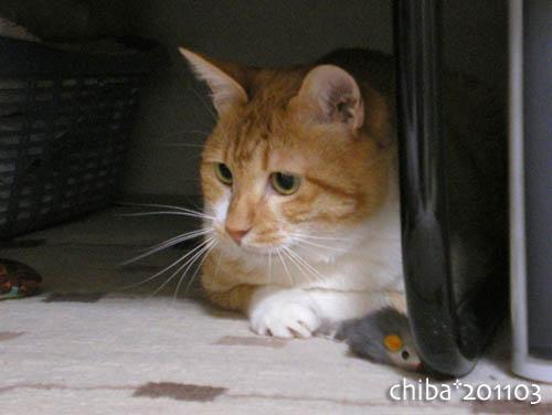 chiba11-3-76.jpg
