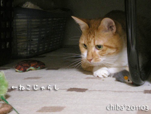 chiba11-3-77.jpg