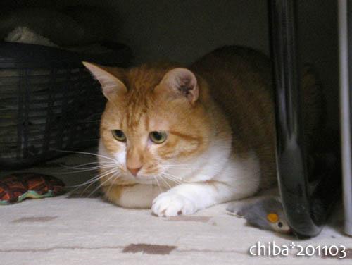 chiba11-3-78.jpg