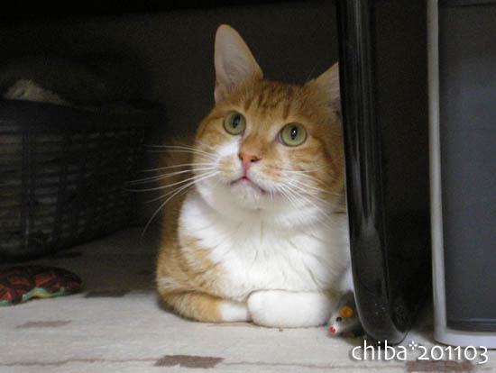 chiba11-3-80.jpg