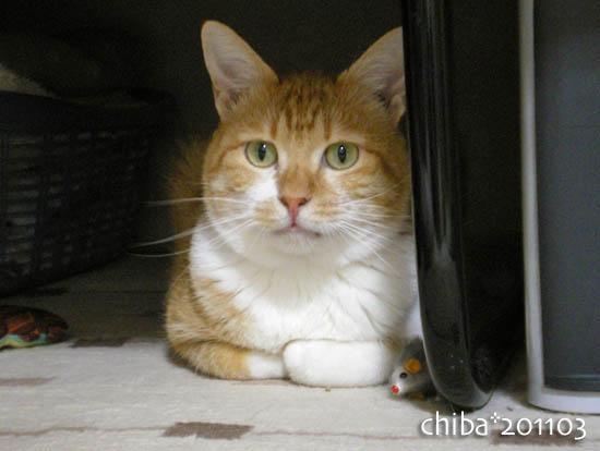 chiba11-3-81.jpg