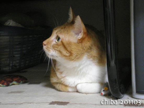 chiba11-3-82.jpg