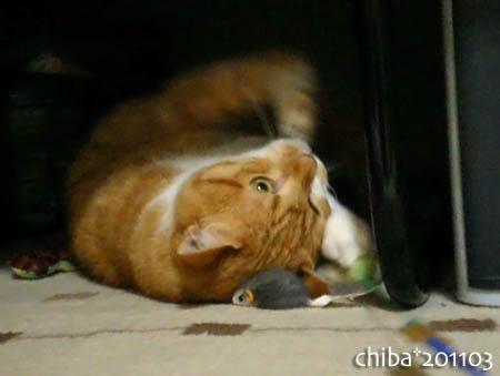 chiba11-3-86.jpg
