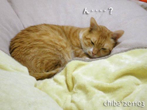 chiba11-3-9.jpg