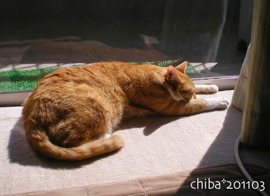 chiba11-3-96.jpg