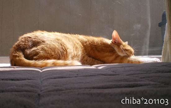 chiba11-3-97.jpg