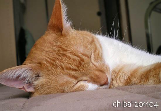 chiba11-4-110x.jpg