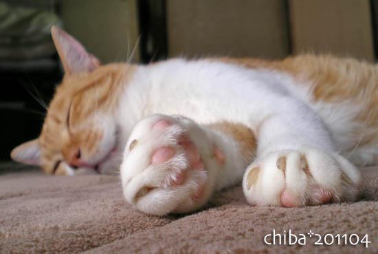 chiba11-4-111.jpg