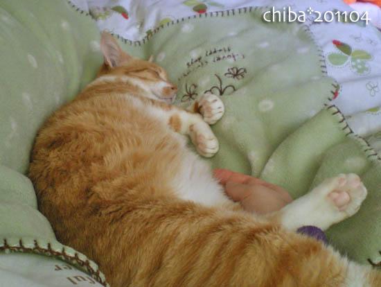 chiba11-4-12.jpg