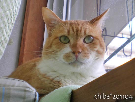 chiba11-4-127.jpg