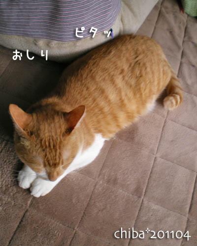 chiba11-4-36.jpg