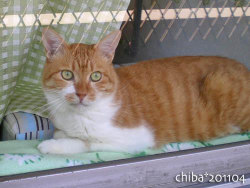 chiba11-4-57.jpg