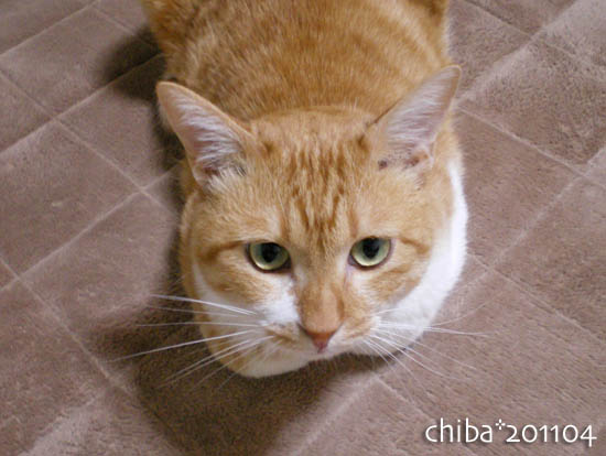 chiba11-4-97.jpg