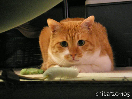 chiba11-5-110.jpg