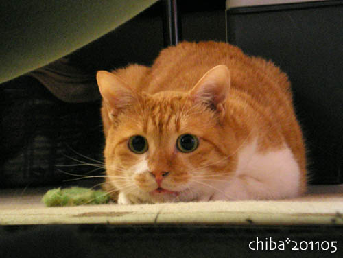 chiba11-5-111.jpg