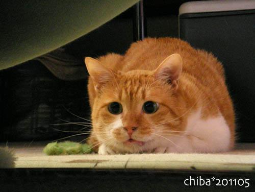 chiba11-5-113.jpg