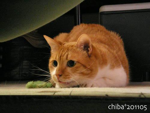 chiba11-5-114.jpg
