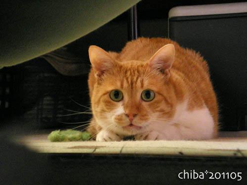 chiba11-5-115.jpg
