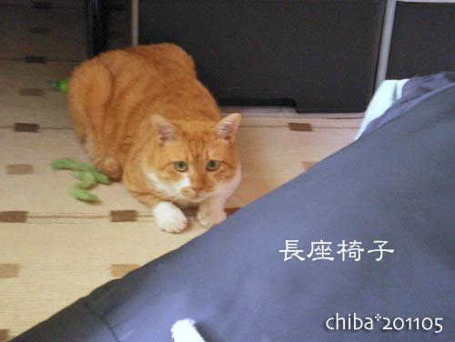 chiba11-5-119.jpg