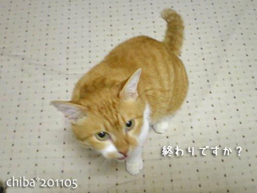 chiba11-5-128.jpg