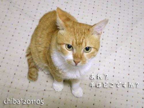 chiba11-5-134.jpg
