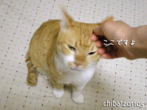chiba11-5-135.jpg