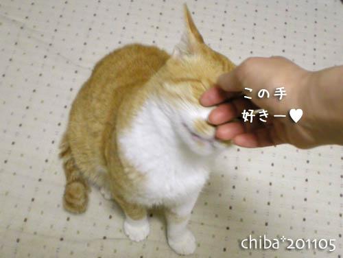 chiba11-5-136.jpg