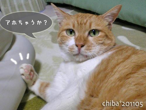 chiba11-5-200.jpg