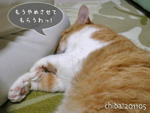 chiba11-5-201.jpg