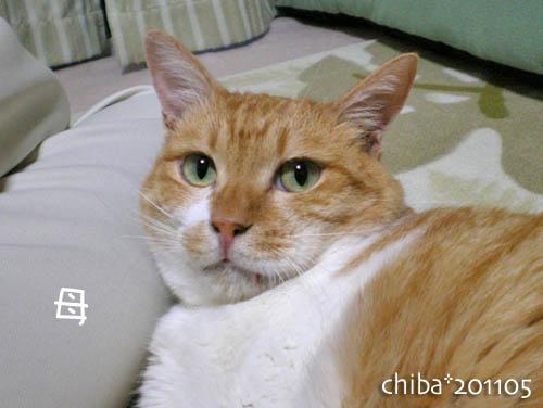 chiba11-5-202.jpg