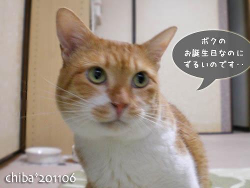 chiba11-6-10.jpg
