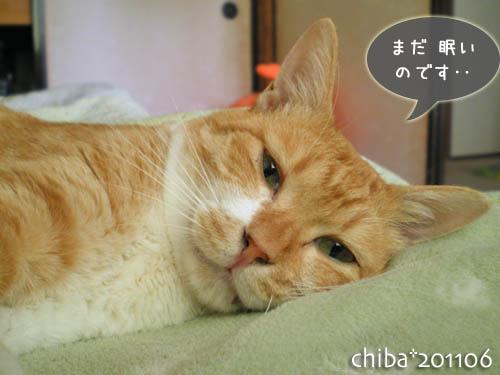 chiba11-6-119.jpg