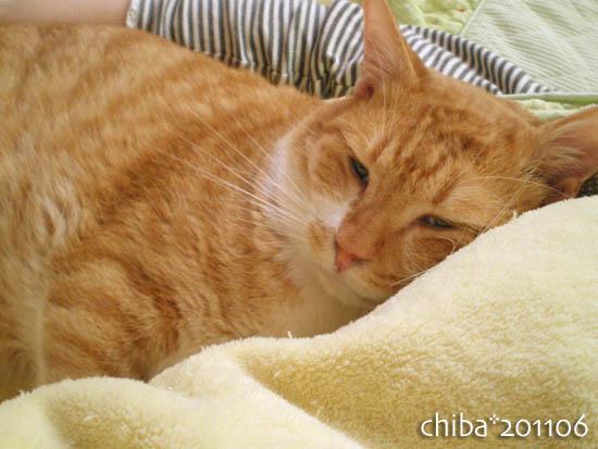 chiba11-6-133.jpg