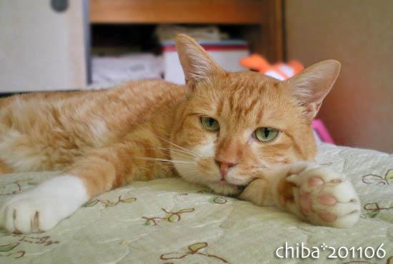 chiba11-6-149.jpg