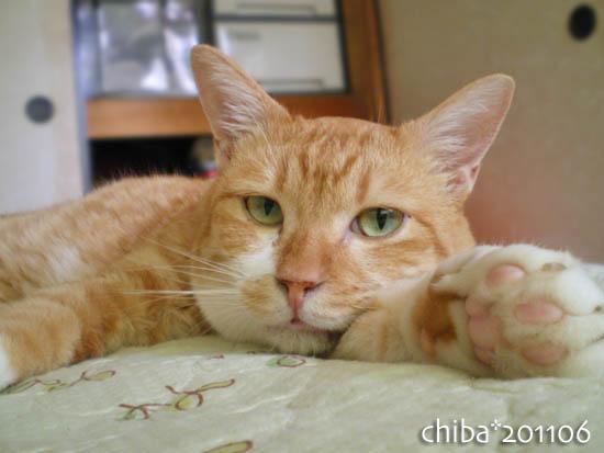 chiba11-6-150.jpg