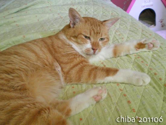 chiba11-6-155.jpg